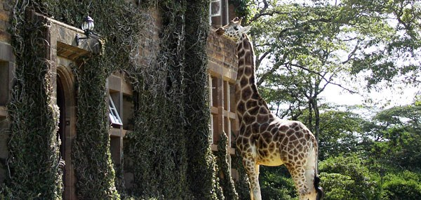 Giraffe Manor