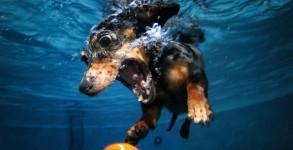 underwater-dogs-00