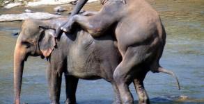 elephant-orphanage-00