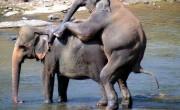 Elephant Orphanage – Sri Lanka